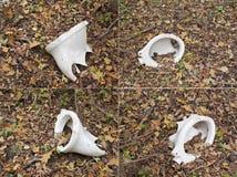 Sanitaire keramiek, gebroken, bosecologie stock foto