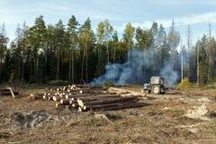 Free Sanitary Logging (deforestation). Balashikha, Moscow Region, Russia. Royalty Free Stock Photo - 60557565