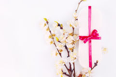 Sanitary pads and apricot blossom Stock Images