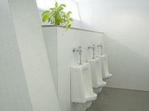 The sanitary ware Royalty Free Stock Image