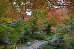 Sanjusangendo Temple. Wiht Japanese Maple in Autumn Royalty Free Stock Photos