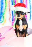 Sankt-Hund Lizenzfreies Stockfoto