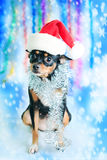 Sankt-Hund Lizenzfreie Stockfotografie