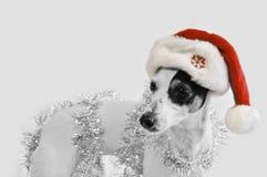 Sankt-Hund Lizenzfreies Stockbild