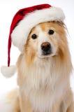 Sankt-Hund Stockfoto