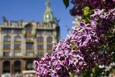 Sankt-Petersburg för solljus för blå himmel för byggnad för lila filialblomning historisk arkitektur utomhus Royaltyfria Bilder