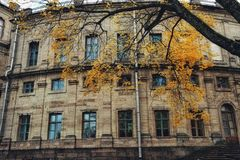 Sankt-Petersburg history building exterior architecture windows tree trunk autumn yellow leaves Royalty Free Stock Images
