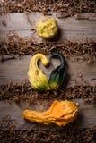 Sankt valentin uppsättning för daggrönsak: pumpor i formen av en hjärta på träbakgrund och hö Fotografering för Bildbyråer