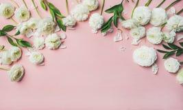 Sankt valentindagbakgrund med ranunculusen blommar över rosa bakgrund Royaltyfria Foton