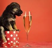Sankt-Welpe am Weihnachtsbaum im Präsentkarton Hundejahr, Haustier auf rotem Hintergrund lizenzfreie stockbilder