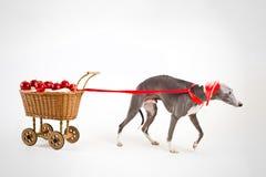 Sankt whippet mit Weihnachtswagen Lizenzfreie Stockfotos