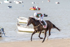 Sanlucar Beach Horse Races Royalty Free Stock Photography
