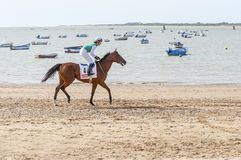 Sanlucar Beach Horse Races Royalty Free Stock Images