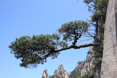 Sanqing mountain Stock Image