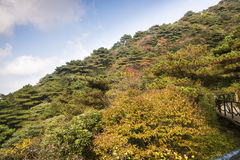 Sanqingshan mountain autumn scenery Royalty Free Stock Photography