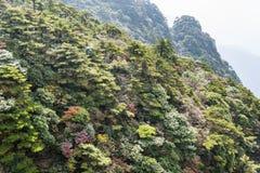 Sanqingshan mountain autumn scenery Royalty Free Stock Photo