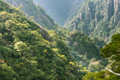 Sanqingshan mountain valley scenery Stock Photography