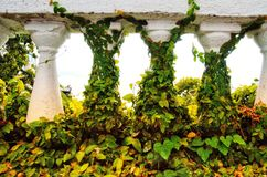 Sanremo, Italy, April 2019: ivy climbs balcony royalty free stock photography