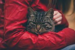 Sans-abri et femme de Gray Cat étreignant des mains Photos libres de droits
