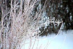 Sans 19 degrés en janvier Photo stock