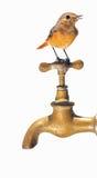Sans eau. Photos libres de droits