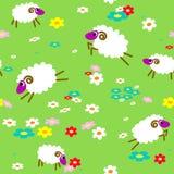 Sans joint avec des moutons dans le pré Image libre de droits