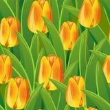 Sans joint des tulipes illustration de vecteur