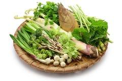 Sansai, japanese edible wild plants vegetables Royalty Free Stock Photos