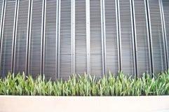 Sansevieria plant Stock Images