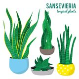 Sansevieria plants in ceramic pots different shapes on white background isolated vectors. Illustration of sansevieria plants in ceramic pots different shapes on Royalty Free Stock Photography