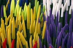 Sansevieriacylindricaen planterar sammethandlag Arkivbilder