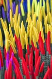 Sansevieriacylindricaen planterar sammethandlag Fotografering för Bildbyråer
