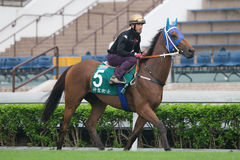 Sanshaawes with Olivier Doleuze at Sha Tin Racecourse, Hong Kong Royalty Free Stock Photo