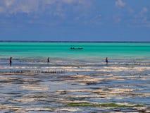 Sansibar-Einheimischstange, die bei Ebbe fischt Stockfotografie