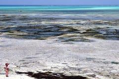 Sansibar-Strand Lizenzfreie Stockfotos