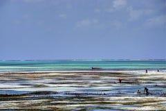 Sansibar-Strand Stockbilder