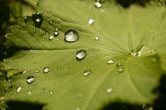 Santé verte Photographie stock