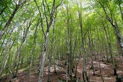 Sant Antonio woods in Pescocostanzo Stock Images