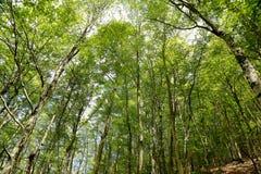 Sant Antonio woods in Pescocostanzo Royalty Free Stock Images