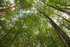 Sant Antonio woods in Pescocostanzo Stock Image