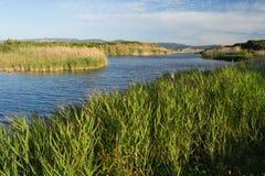 Sant Climent池塘。Delta del Llobregat。 免版税库存图片