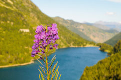 Sant Maurici Lake Stock Photos