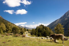 Sant Maurici National Park - Pyrenees royalty free stock photo
