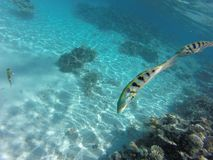 Sant underwater in maledives. With colorfull fisch stock image
