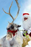 Santa�s drag animal Stock Photo