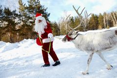 Santa�s pet Stock Photography