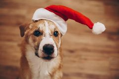 santa καπέλων σκυλιών Χαρούμενα Χριστούγεννα και έννοια καλής χρονιάς SP Στοκ φωτογραφία με δικαίωμα ελεύθερης χρήσης