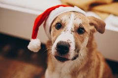 santa καπέλων σκυλιών Χαρούμενα Χριστούγεννα και έννοια καλής χρονιάς SP Στοκ φωτογραφίες με δικαίωμα ελεύθερης χρήσης
