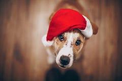 santa καπέλων σκυλιών Χαρούμενα Χριστούγεννα και έννοια καλής χρονιάς SP Στοκ Εικόνες
