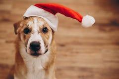 santa καπέλων σκυλιών Χαρούμενα Χριστούγεννα και έννοια καλής χρονιάς SP Στοκ Φωτογραφίες